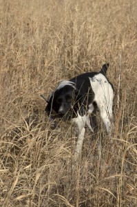 GM Pheasant Hunt_Web-95