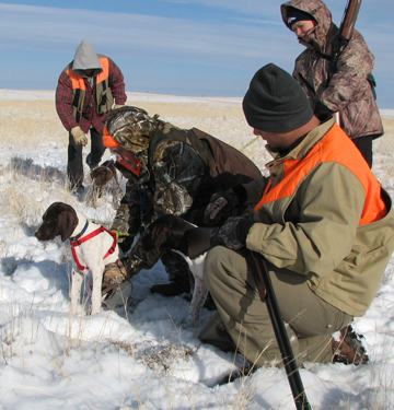Puppy Training for Hunting Dogs, Colorado