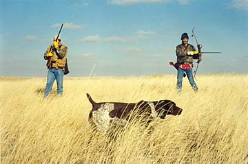 Bow hunting colorado, training, pheasant hunting