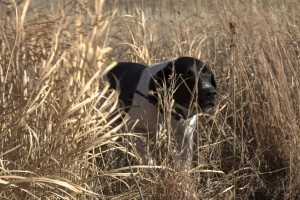 slick in the tall grass