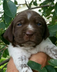 new-puppy-236x300